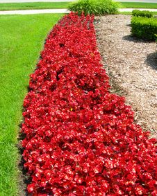 Landscape With Red Flower Beds In Spring Royalty Free Stock Image