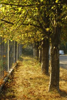 Free Fence Vs Trees Royalty Free Stock Image - 30638146