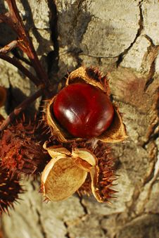 Free Chestnuts Royalty Free Stock Photography - 30638147
