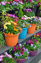 Free Colorful Flowerpots On Display Stock Photo - 30641960