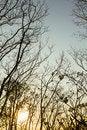 Free Tree Silhouette Stock Image - 30643271