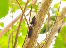 Free Cicada On Tree Royalty Free Stock Photography - 30643577
