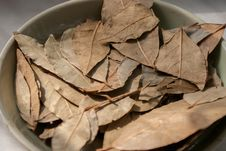 Dry Bay Leaves Royalty Free Stock Photography