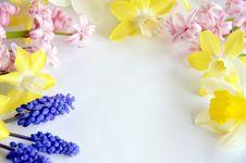 Free Frame Of Spring Flower Stock Photos - 30648083