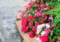 Free Flowering Watercress Stock Photos - 30659833