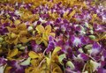 Free Purple And Orange Orchid Royalty Free Stock Photo - 30659975