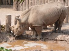 Free Rhinoceros In The Zoo Stock Images - 30657874