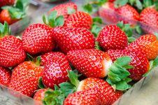 Free Fresh Strawberries Stock Photo - 30665760