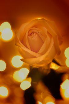 Free Rose Royalty Free Stock Image - 30669406