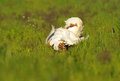 Free Bustard In The Field Stock Photography - 30670172