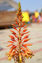 Free Orange Tropical Flower Stock Photos - 30671693