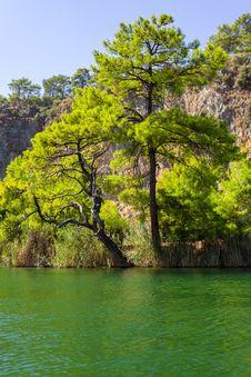 Free Pine At Green Lake Stock Photography - 30680512
