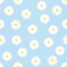 Seamless Pattern With Camomiles Royalty Free Stock Photos