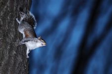 Free Squirrel And Tree Stock Photo - 30681410