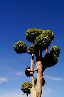 Free Treee With Blue Sky Royalty Free Stock Images - 30682129