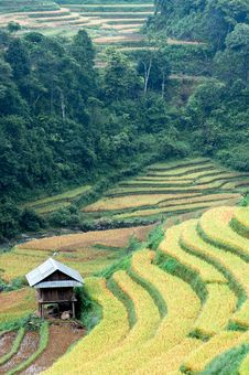 Stilt House On The Rice Terraced Field Stock Photos