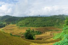 Free Valley Of Rice Terraced Field With Cloudy Sky Royalty Free Stock Images - 30685839