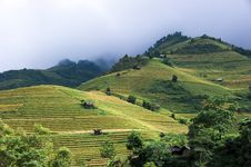 Free Hills Of Rice Terraced Fields Royalty Free Stock Image - 30686736