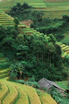 Free Hills Of Rice Terraced Fields Royalty Free Stock Photo - 30686965