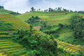 Free Rice Fields With Mountains And Clouds Stock Images - 30697904