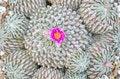 Free Cactus Stock Photos - 30699753
