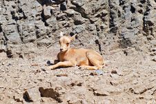 Free A Little Fawn On The Background Of Rocks Stock Photos - 30691723