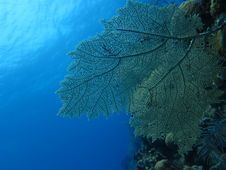 Free Coral Reef Royalty Free Stock Images - 30696049