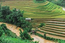 Stilt House On The Rice Terraced Field With River And Wooden Bridge Stock Photo