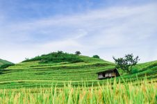 Free Hill Of Rice Terrace Fields And Stilt House Stock Photo - 30698550