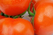 Free Tomatoes With Stems Stock Images - 30699034