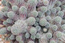 Free Cactus Royalty Free Stock Photos - 30699828