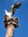 Free Hawk Statue Royalty Free Stock Photos - 3077258
