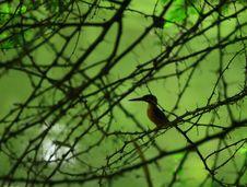 Free Kingfisher Stock Photography - 3070542