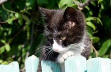 Free Black And White Kitten Stock Image - 3071791