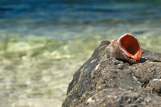 Free Empty Shell On Sea Rock Royalty Free Stock Photography - 3073697