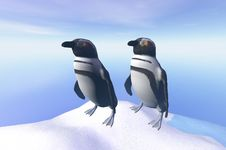 Free Penguin Stock Photo - 3074050