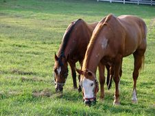 Free Horses Grazing Stock Photos - 3074123