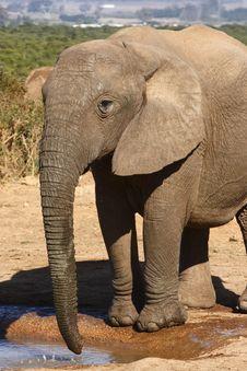 Free Elephant Calf At A Waterhole Stock Photos - 3074953
