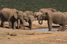 Free Elephants Gathering Royalty Free Stock Photography - 3075397