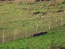 Free Pasture Landscape Royalty Free Stock Photography - 3075677
