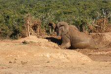 Free Elephant In The Mud Royalty Free Stock Photography - 3075777