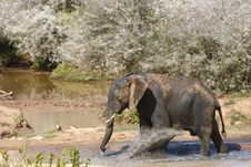 Free Elephant Kicking Water Royalty Free Stock Photography - 3075847