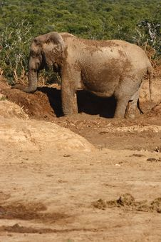 Free Elephant Playing In The Mud Stock Images - 3075934
