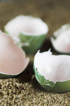 Free Empty Eggs Stock Photo - 3075990