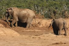 Free Elephants Playing In The Mud Stock Photo - 3076090