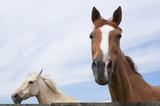 Free Horses Royalty Free Stock Photo - 3076105