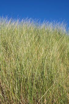 Free Sand Dune Grass Royalty Free Stock Images - 3076229