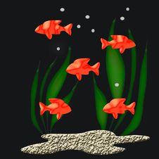 Free Tropical Fish Stock Photos - 3076263
