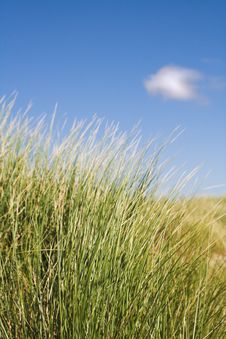 Free Sand Dune Grass Stock Images - 3076294