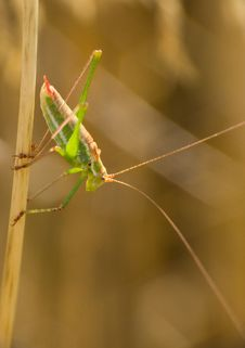 Free Cricket Stock Images - 3076334